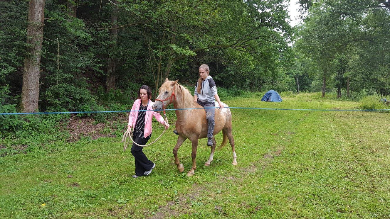 Občas vašeho koně povede lektor. Trénink je vhodný pro nezkušené jezdce.